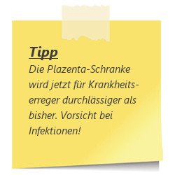 Tipp Plazenta