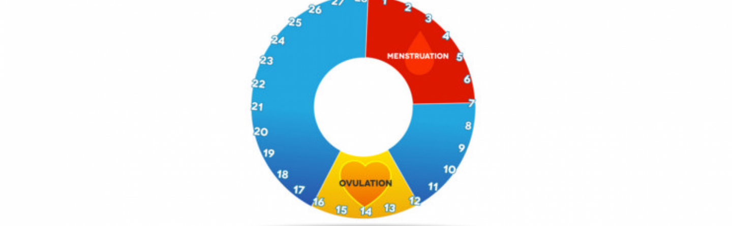 Menstruation fruchtbare tage